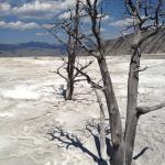 Yellowstone National Park - Sulfer