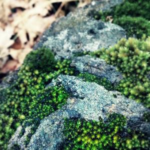 Moss on a rock - Arkansas